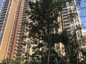 深圳大族云峰花园新房楼盘实景图19